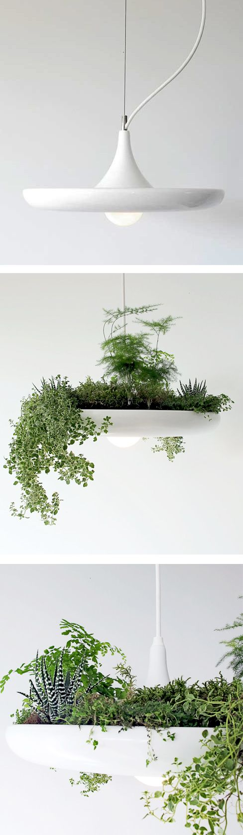 Pendant Lamp that can be used to grow herbs or succulents   oh my goodness. If we have a house again - this is beyond perfect.