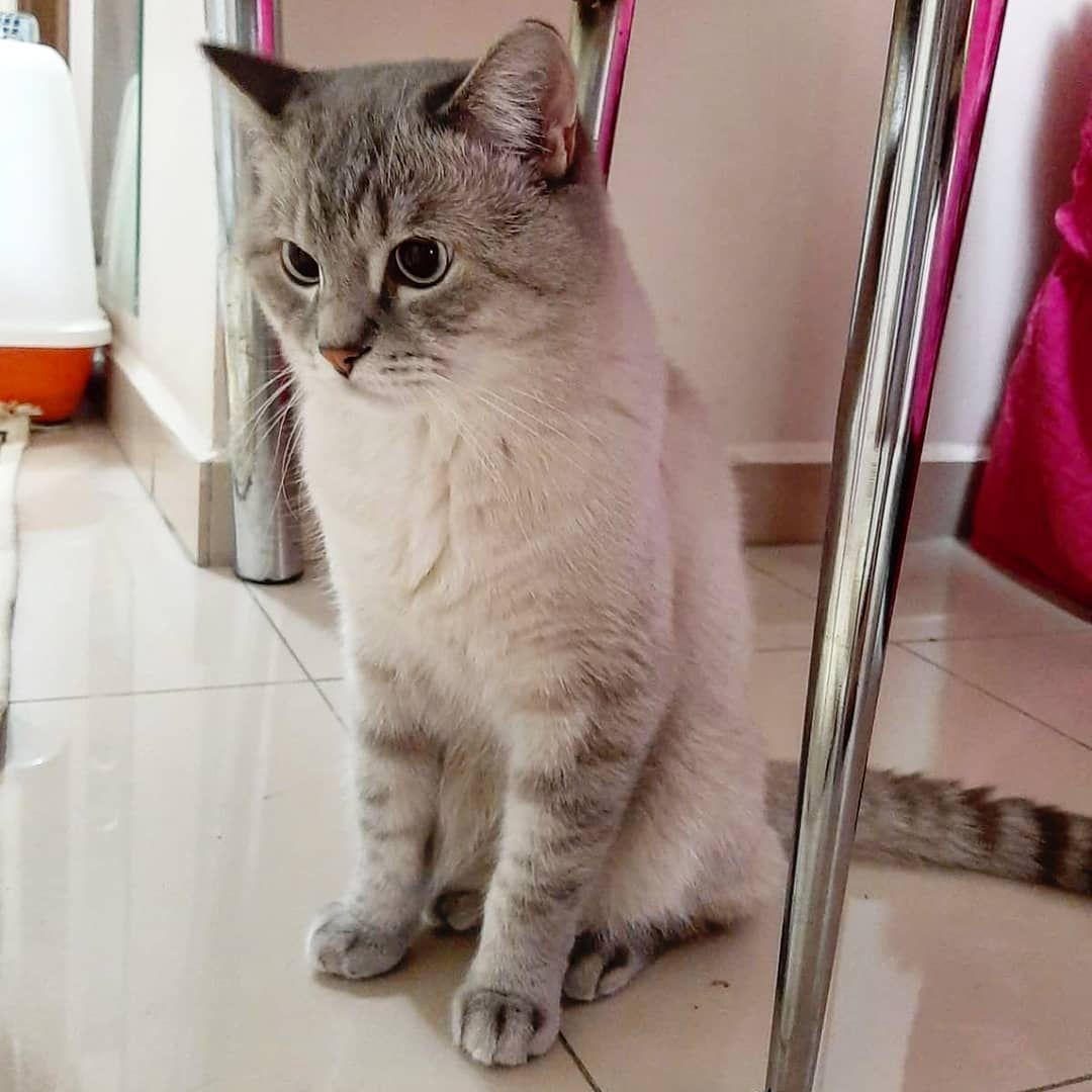 #フィルム写真普及委員会#フィルムに恋してる#フィルム部#カメラ女子#一人旅#ひとり旅#ハワイ#ホノカア#ホノカアガール #朝#今から #catlifestylechile #catstagram #cats #cat #catlife #schotishcat #schotishstraight #scottishfold #schotish #insthramphoto #photo #photography #pet #fluffy Instagram Bridge#フィルム写真普及委員会#フィルムに恋してる#フィルム部#カメラ女子#一人旅#ひとり旅#ハワイ#ホノカア#ホノカアガール...
