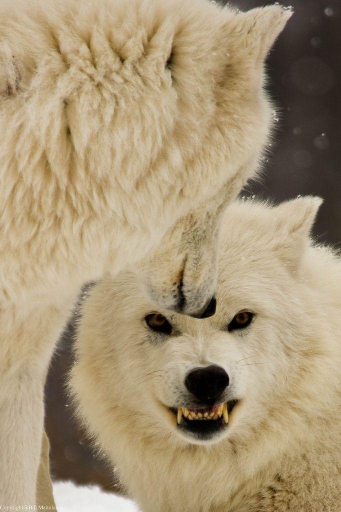 Warmth through fur