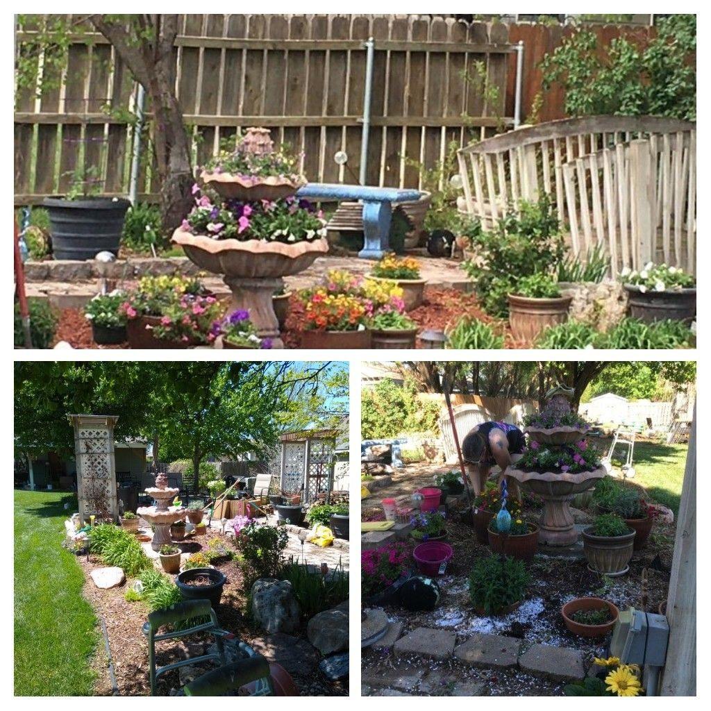 Pin By Tanya Thusselman On Garden Yard Garden And Yard Plants Garden Backyard garden kit jamaica