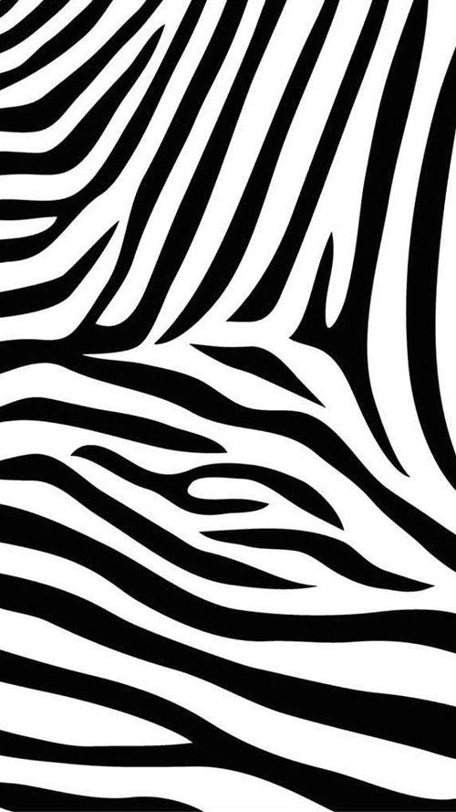 Zebra Zebra Print Wallpaper Animal Print Wallpaper Zebra Wallpaper Black and white wallpaper zebra