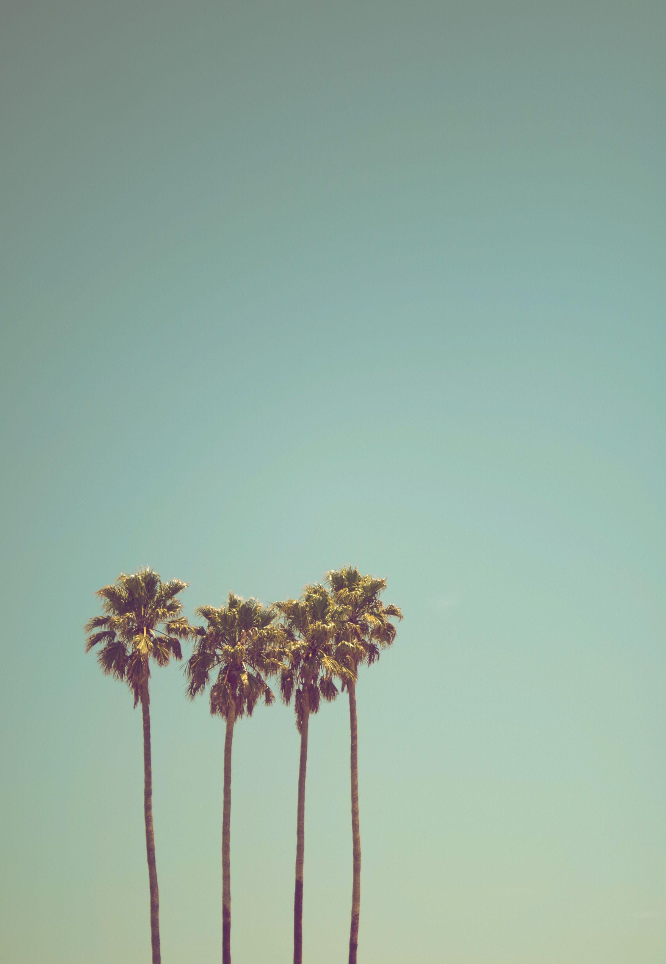 Summer Backdrop Seaside Coconut Tree Backdrops Tropical