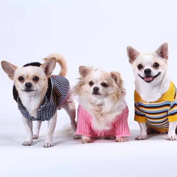 Vom Chihuahua bis zum riesigen Hund bei DoggyDolly