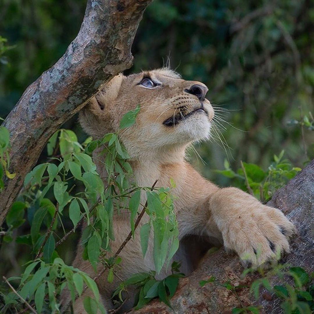Funny Wildlife in 2020 Animals beautiful, Cute lion, Animals