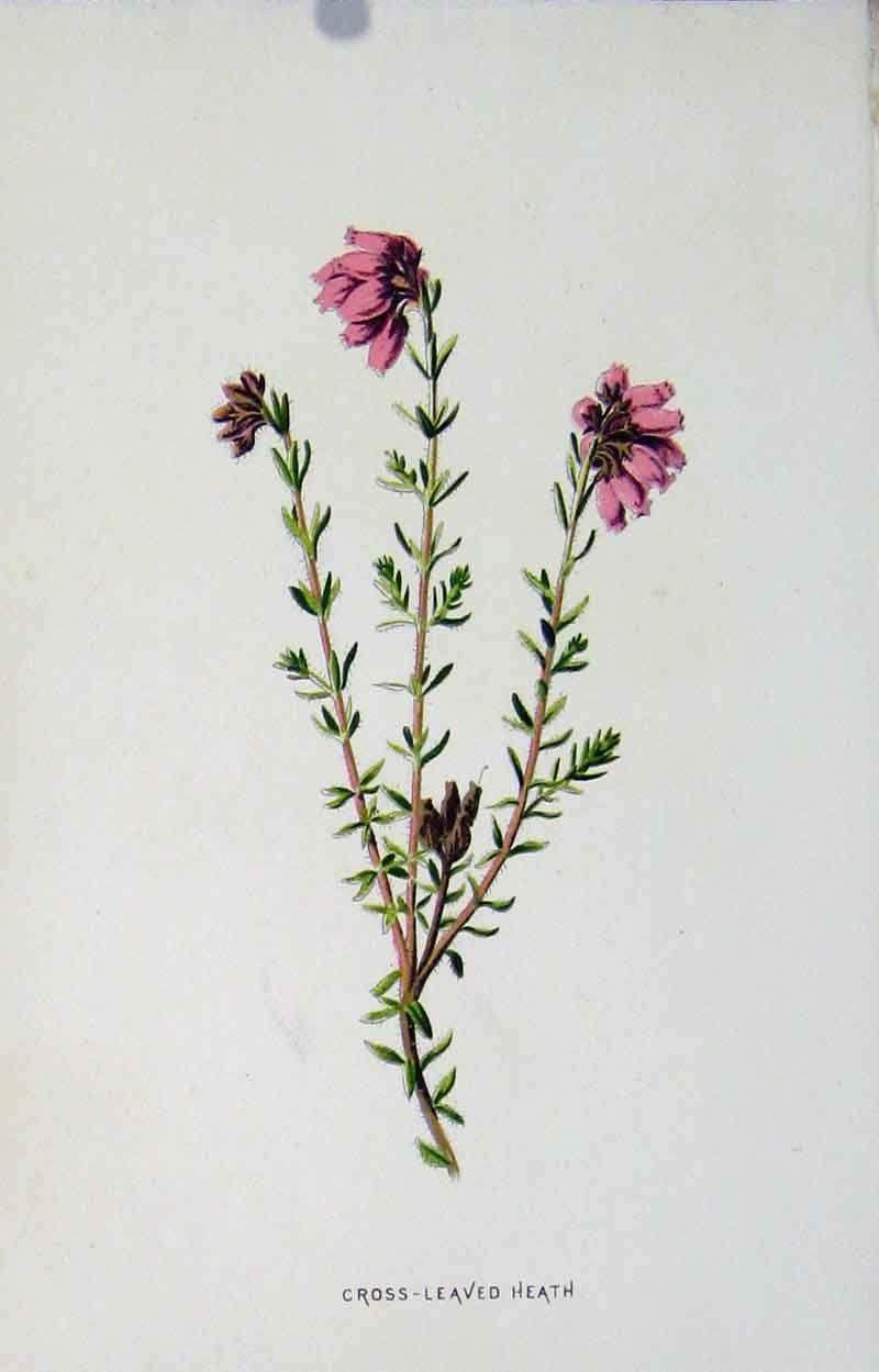 7901883407 Jpg 800 1249 Botanical Prints Victorian Art Prints