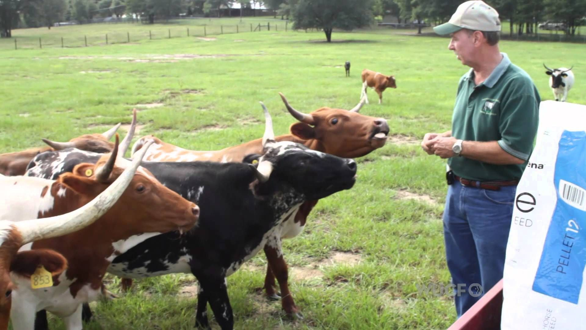 Park Art My WordPress Blog_Buy Half A Cow Florida