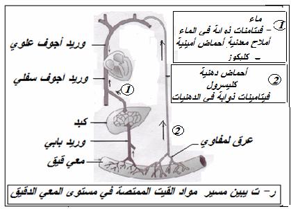 الطريق الدموي و اللمفاوي Image Search Results Letters Symbols Digit