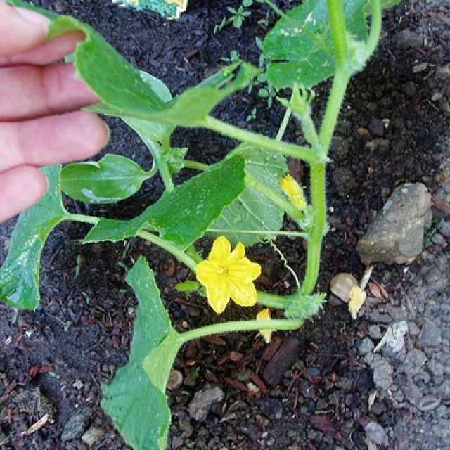 Fantastic link for basic gardening tips vegetables harvest