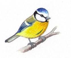 Bildergebnis f r blaumeise im winter v gel im winter - Vorlage vogel ...