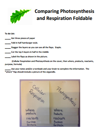 How should I start my essay about photosynthesis and respiration?