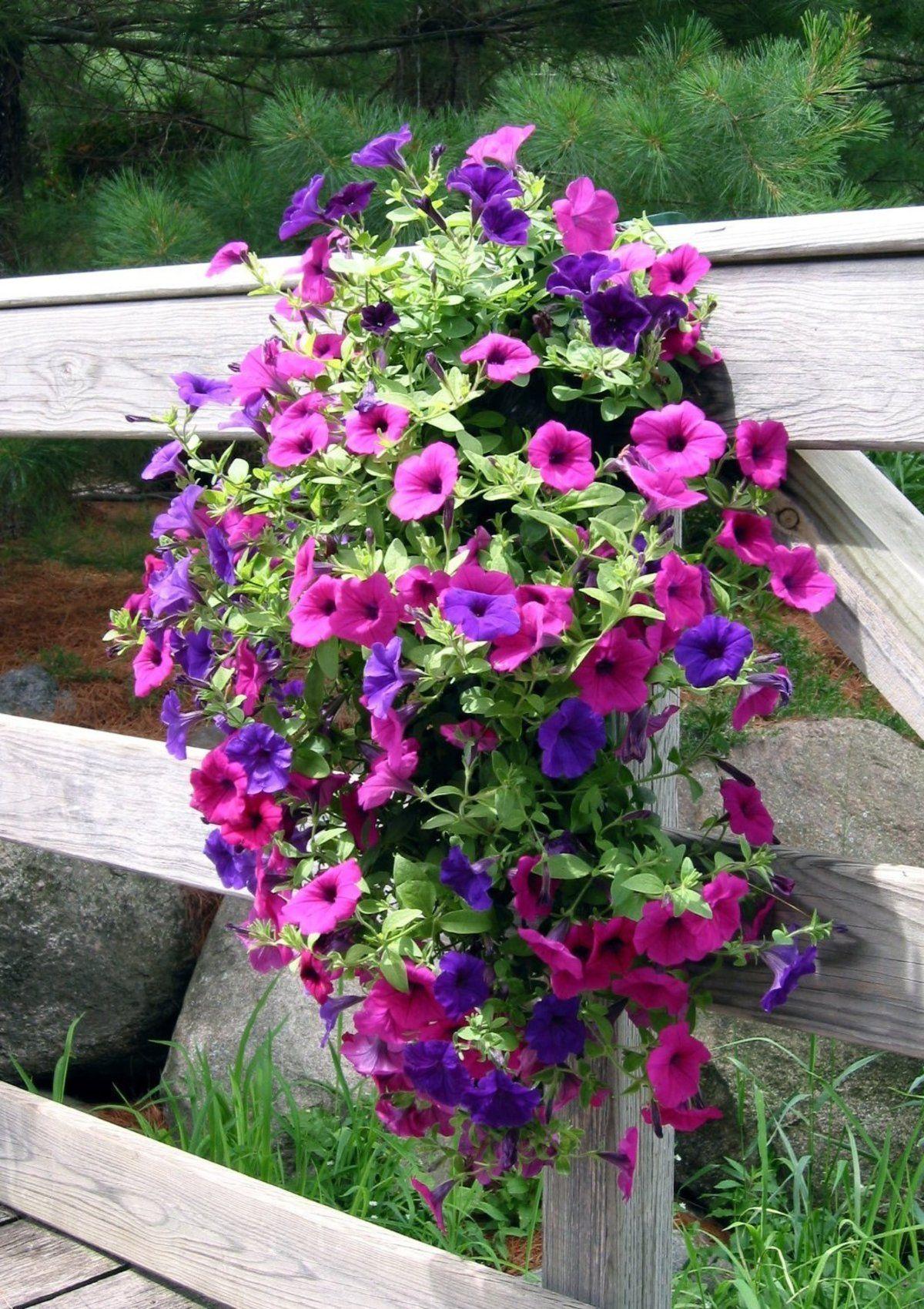 Flower Garden Hanging Bag Free Shipping Outdoor Flowers Ideas Beautiful