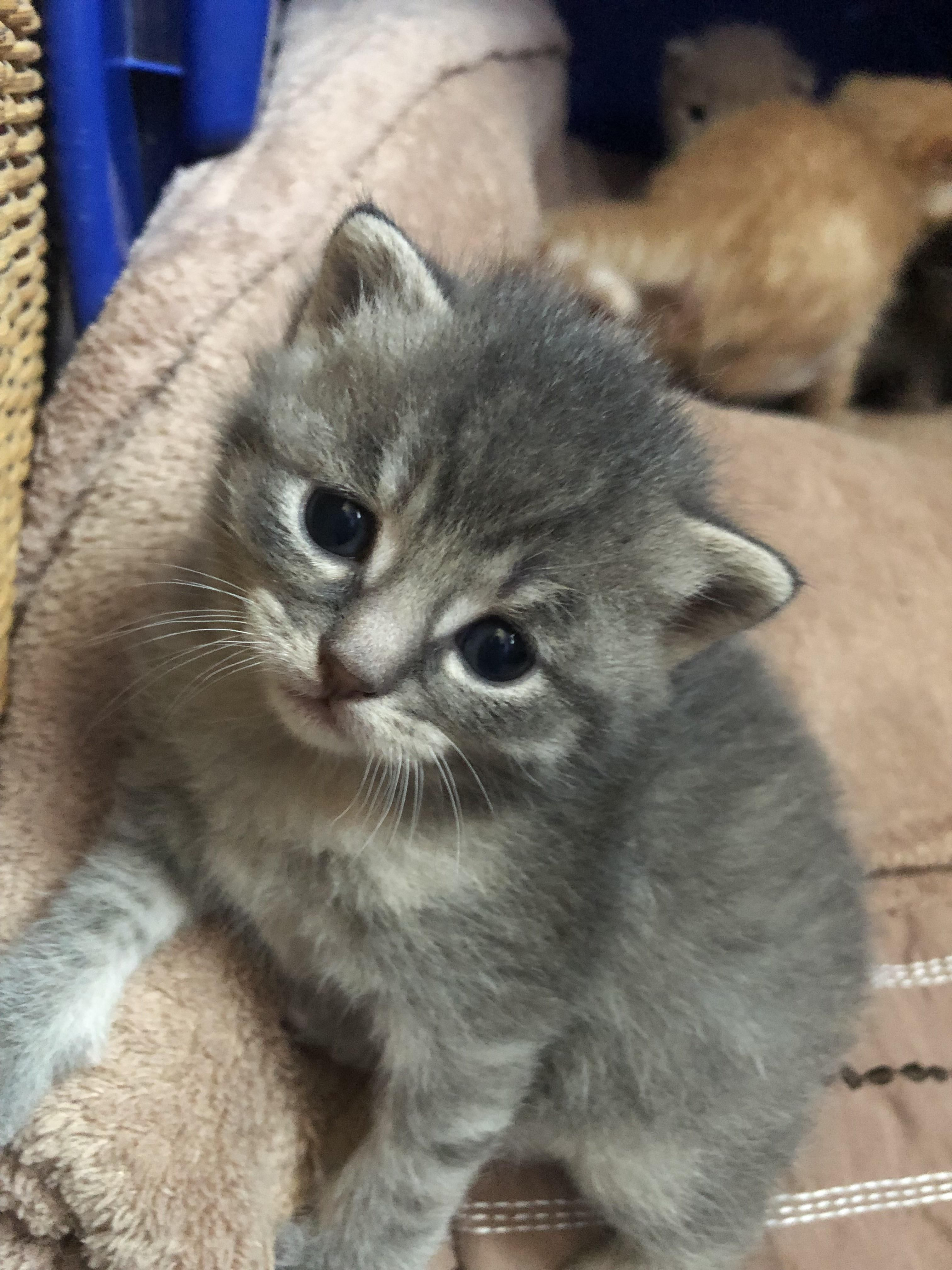 Update On The Kittens They Are Starting To Walk Around And They Have All Opened There Eyeshttps I Redd It 8woaad Kittens Animal Rescue Shelters Animal Rescue