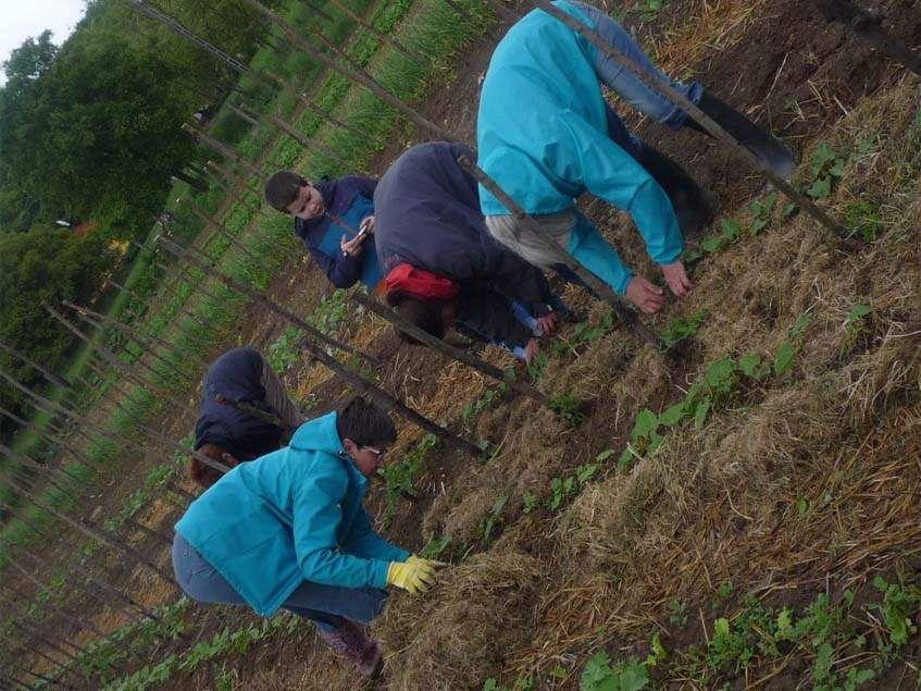 Hogyan termeszthetünk nagyszerű ételeket a kertben