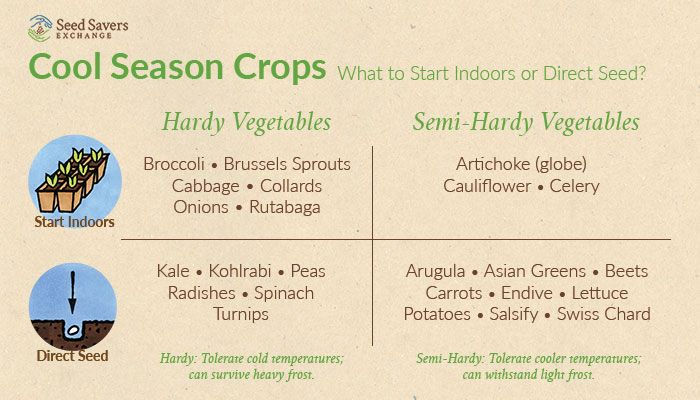 Cool Season Crops Can Be Started Early Indoors To Get A Jump And Then Transplanted Outdoors Spring Vegetables Seasonal Vegetables Chart Spring Plants