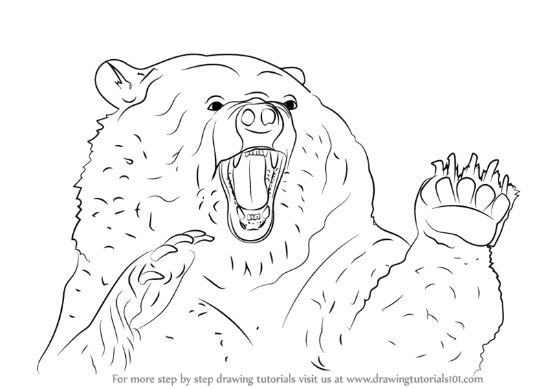 Learn How To Draw An Angry Grizzly Bear Bears Step By Step Drawing Tutorials