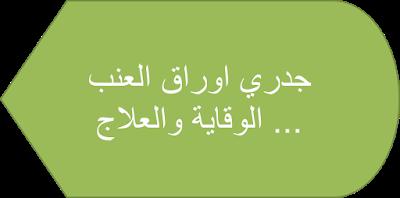 البيت العربي جدري اوراق العنب الوقاية والعلاج Grapes