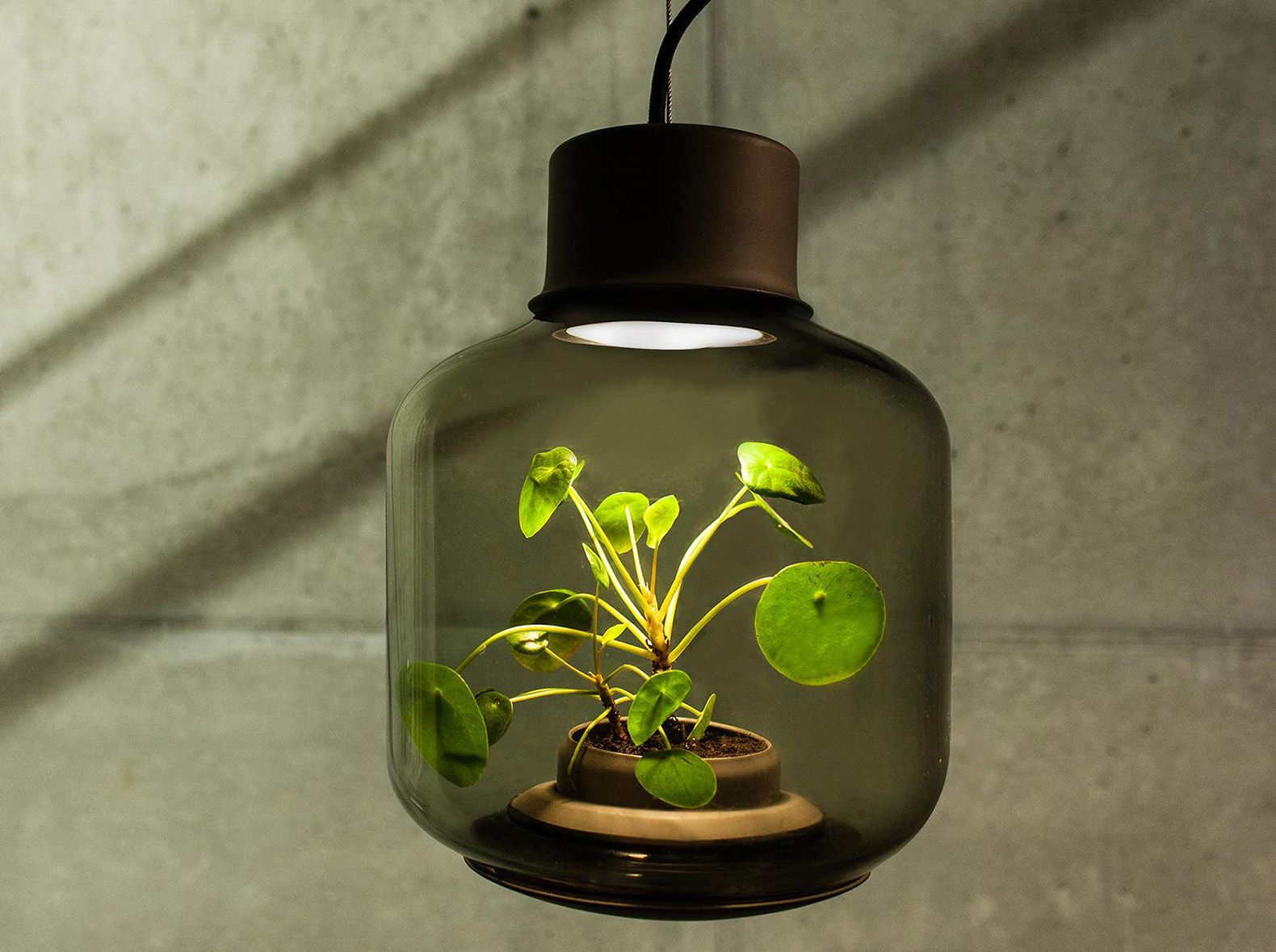 These Lamps Let You Grow Plants Anywhere   Even In Windowless Rooms