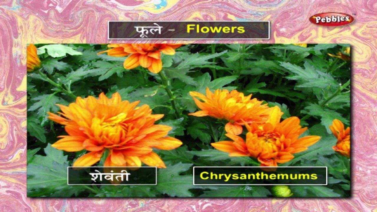 Learn Flowers in Marathi मराठी शिकूया Learn Marathi