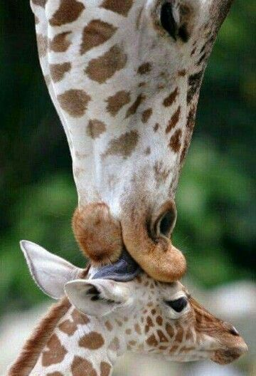 The best kisses are from mamma, no matter what species you are!
