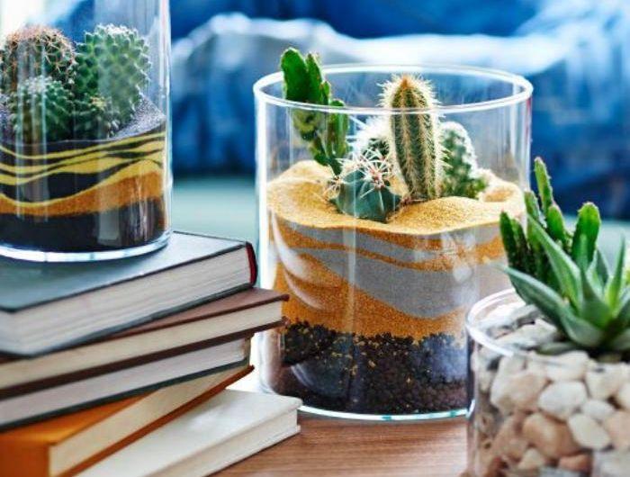 d corez avec les plantes grasses d 39 int rieur terrariums en verre sable color. Black Bedroom Furniture Sets. Home Design Ideas