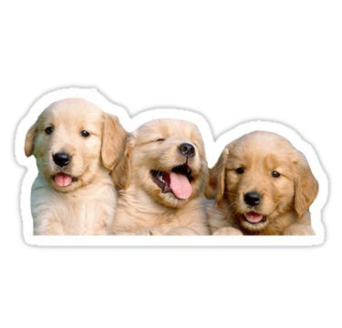 Golden Retriever Puppies Sticker Cute Animals Retriever Puppy