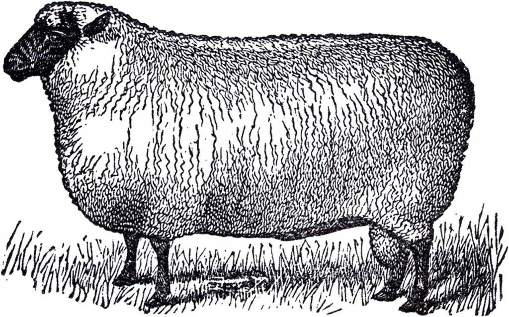 12 Sheep Images Sheep Illustration Primitive Sheep Clip Art Vintage