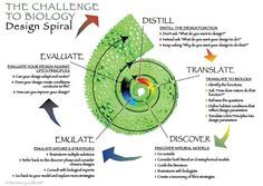 The Design Spiral is a visual representation of a Biomimicry-inspired design process.