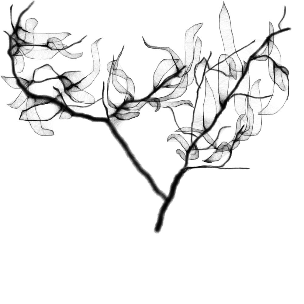 Convallaria zentangle and doodles pinterest doodles