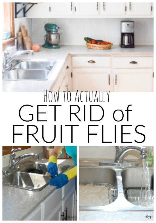 e32f29b5a09a2a0febbf1465c81b02ab - How To Get Rid Of Fruit Flies In Garage