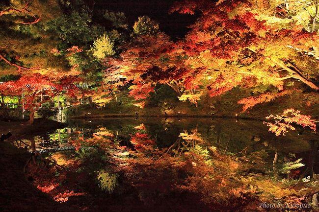 高台寺 ライトアップ 秋