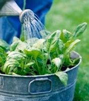 Organic Gardens Network: 66 Things You Can Grow In Containers