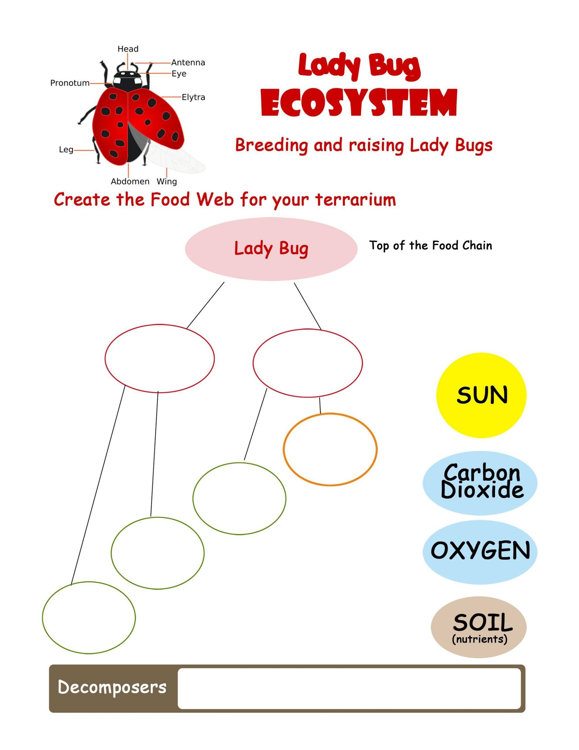 Ladybug Worksheets For Kindergarten In