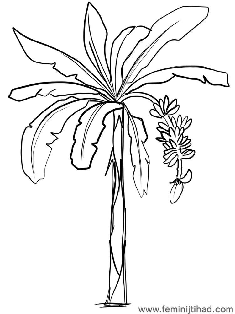 Banana Tree Coloring Page Print Seni