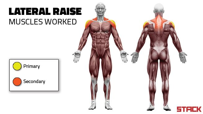 Lateral Raise Muscles Worked - STACK | WOD | Pinterest | Lateral raises