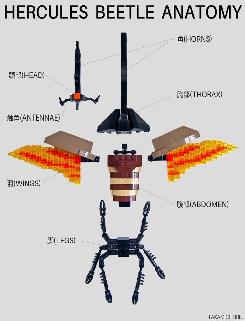 Hercules Beetle Anatomy | Lego Animals & People | Pinterest | Lego ...
