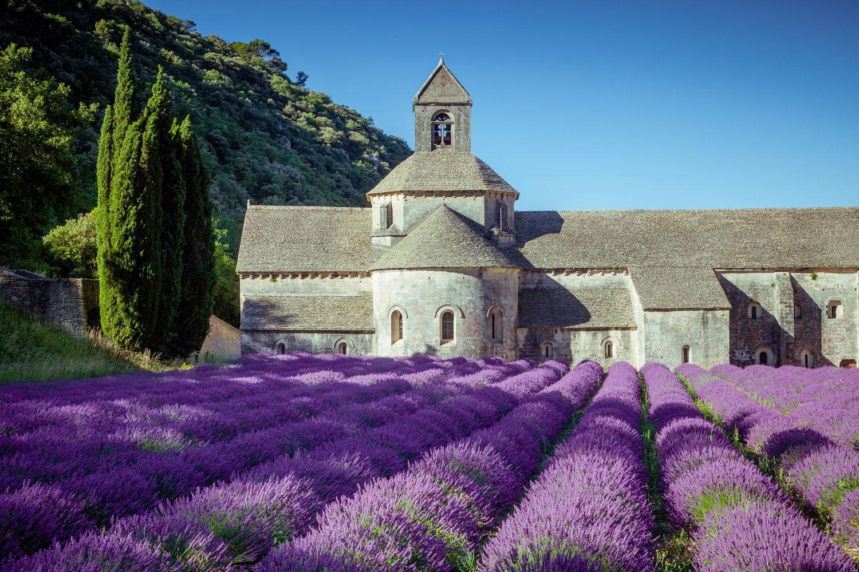 Le Mas De La Chapelle La Region Provence Lavender