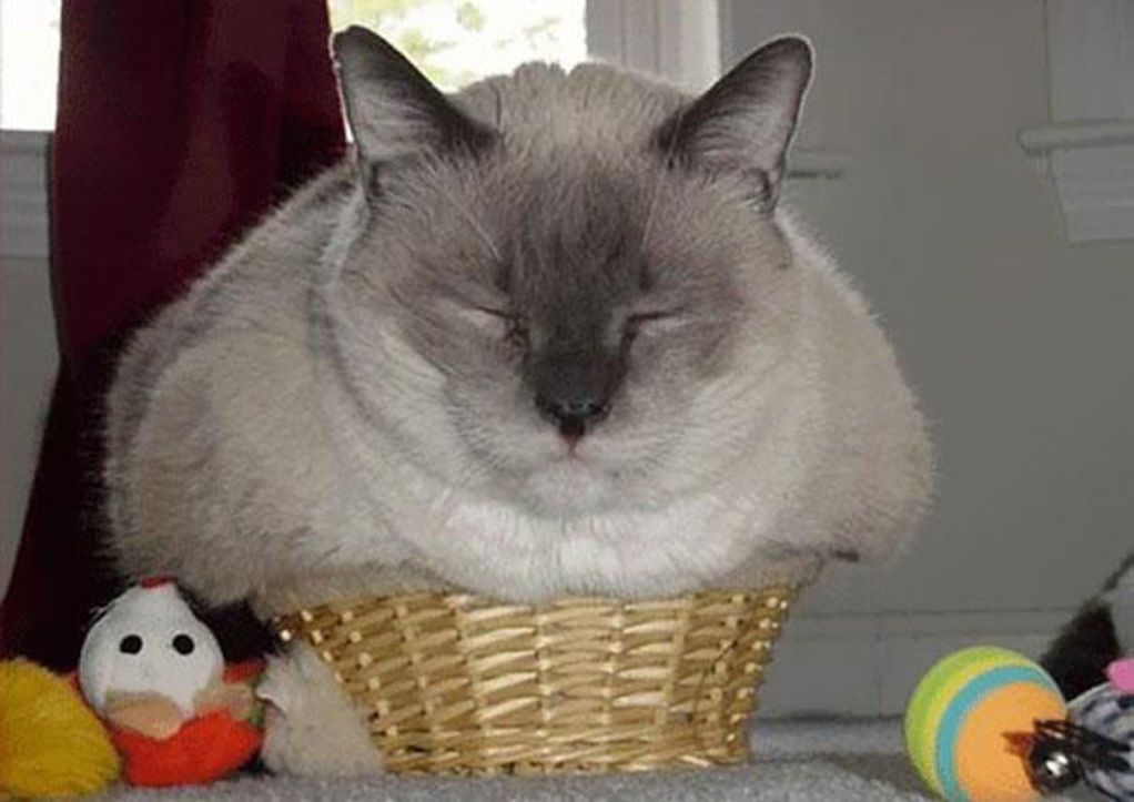 32 Cats That Are the Very Definition of 'If It Fits, I Sits' | Blaze Press