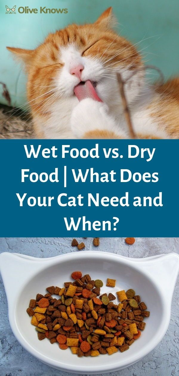 Wet Food vs Dry Food What Does Your Cat Need and When