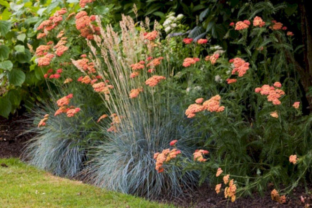 Marvelous 75+ Best Planting Combination Ideas For Beautiful Garden Https://freshouz.com/75-best-planting-combination-ideas… | Beautiful Gardens, Plants, Blue Fescue