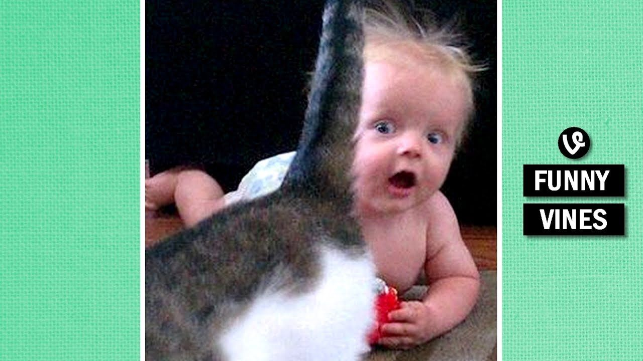 Impossible Try To Stop Laughing Challenge Super Funny Baby Animal Vi Funny Babies Funny Baby Faces Funny Memes About Girls