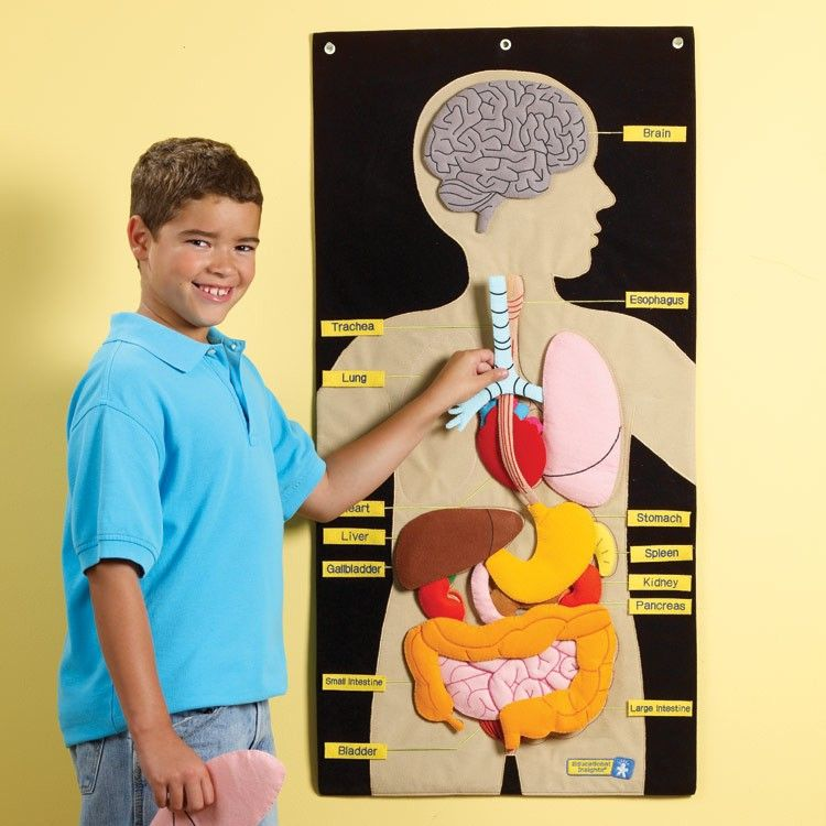 Make a Life Size Body Map to Help Kids Learn Anatomy | Teaching kids ...
