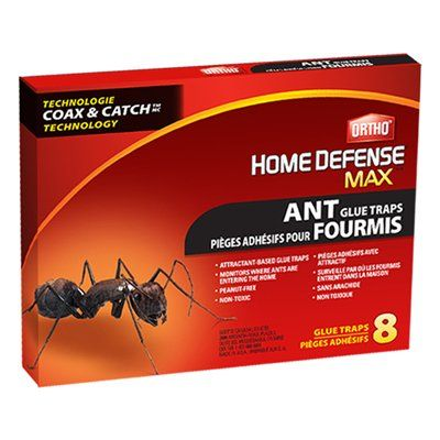 Ortho 0 Oz Home Defense Max Ant Glue Traps 8 Pack 12 Case