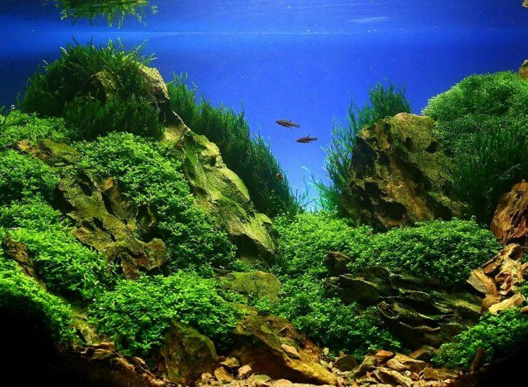 Aquarium einrichten schöne Bilder Ideen | Aquarium | Pinterest ...