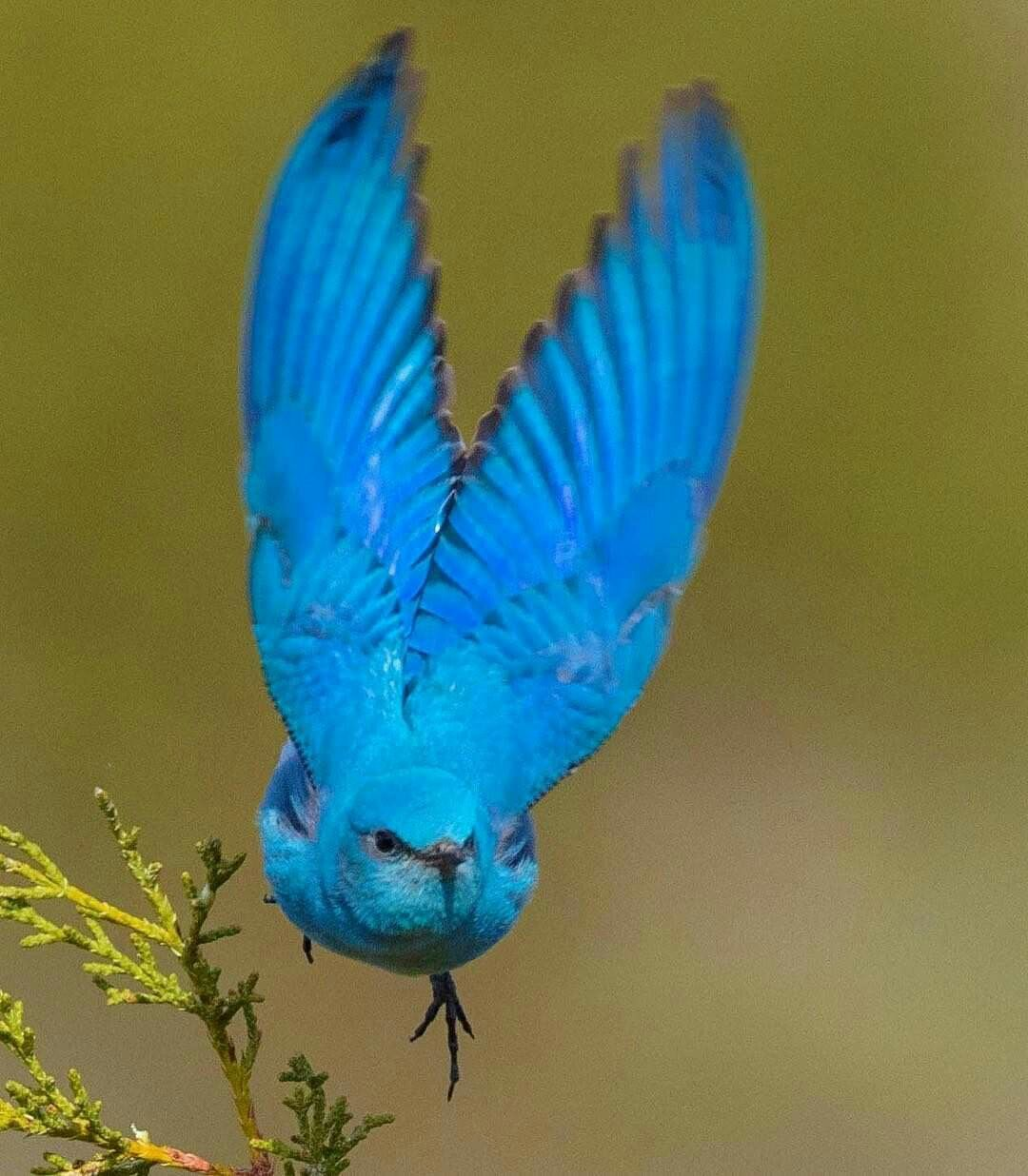 Idea by Carol Stoner on Wild birds Bird photography