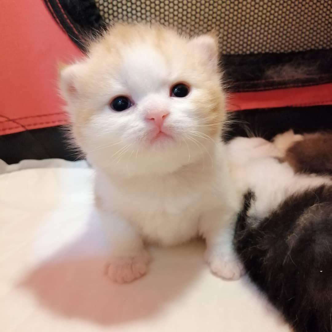 Pin By Janet On Beautiful Kittens Cat Insurance Beautiful