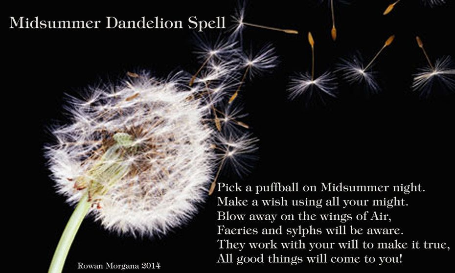 Midsummer Wishing Spell Sacred Wicca Dandelion Dandelion Benefits Midsummer