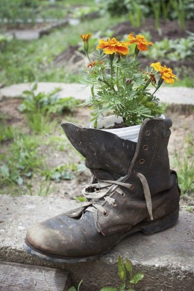 Growing Plants In Shoes How To Make A Shoe Garden Planter