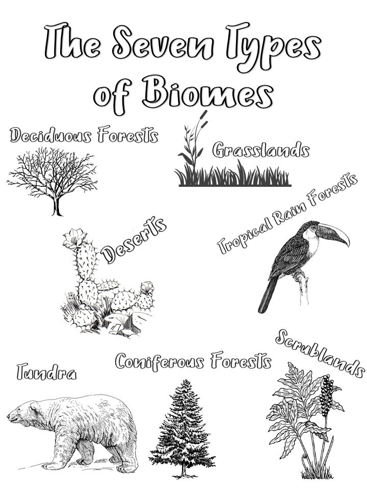 Color the seven types of Biomes and put into your Science