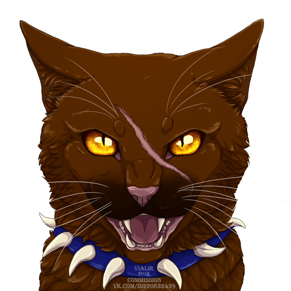 Untitled Warrior cats, Warrior cat drawings, Warrior