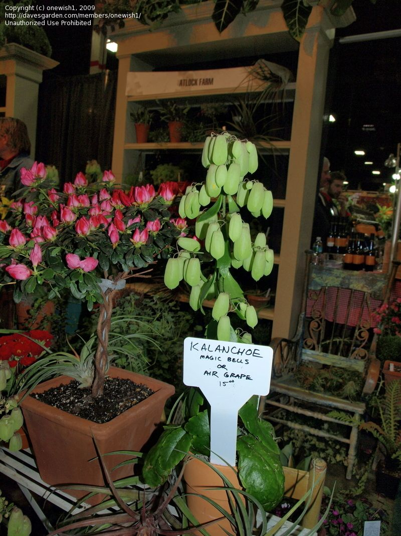 I Took This Photo At The Atlock Farms Table At The NJ Flower U0026 Garden Show